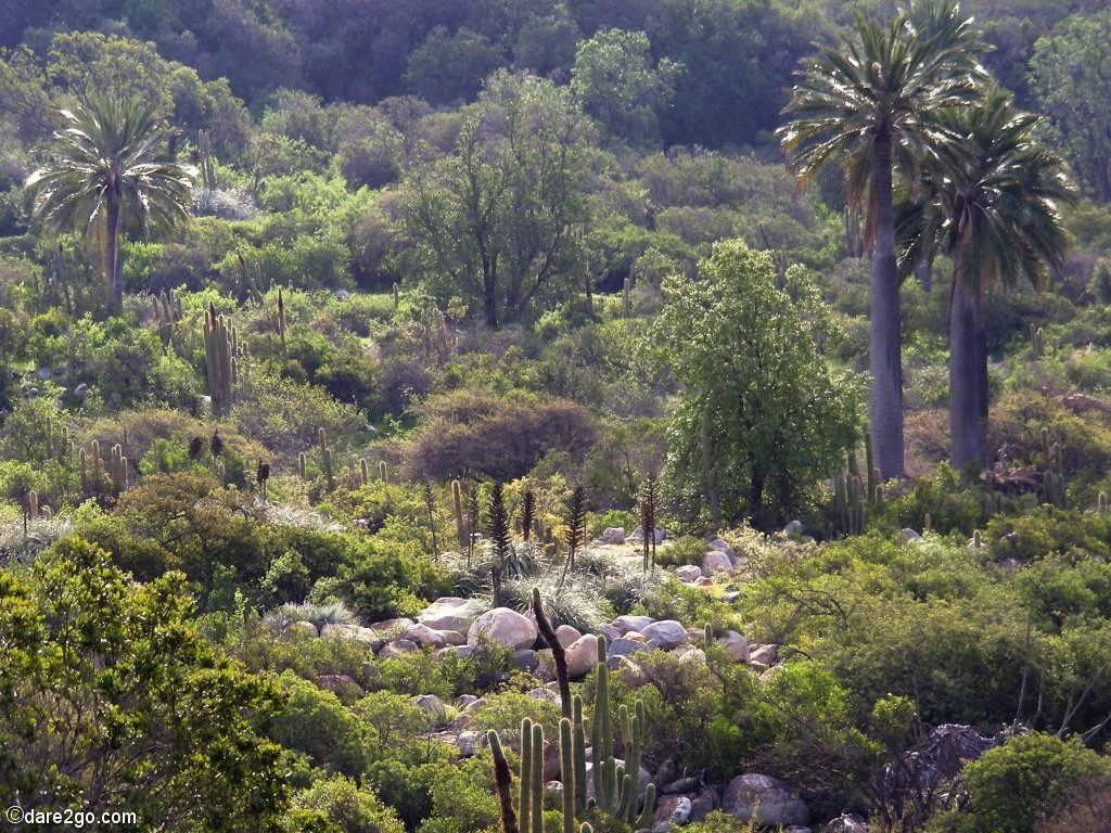 """La Campana Natl. Park Chile: """"Valle De Ocoa"""""""