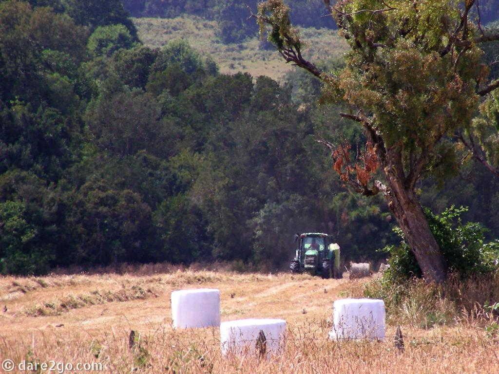 baling freshly cut hay