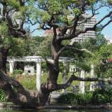 Buenos Aires: the rose garden near Av. del Libertador